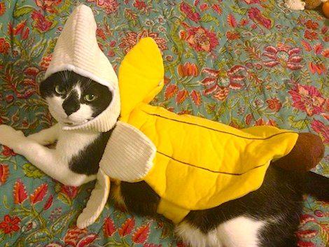 022dd26382cc99822c136882a23e98be--banana-costume-taco-cat.jpg